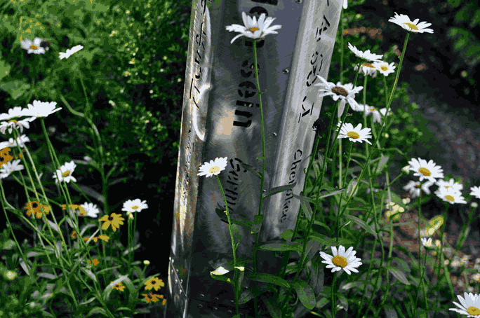 The base of a stainless steel hexagonal peace pole, with the text cut all the way through it, is seen surrounded by daisies.